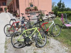 Bicycles in front yard